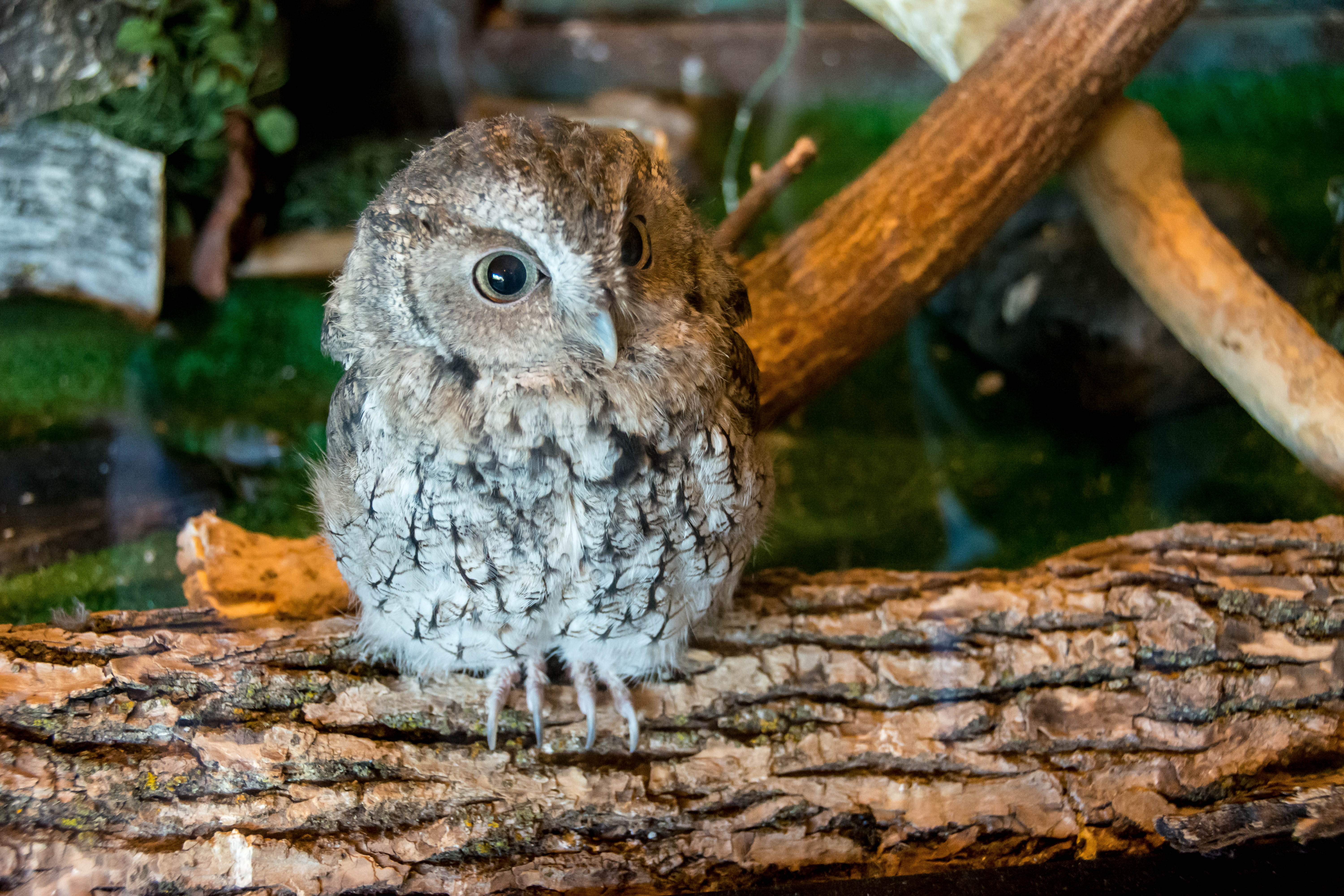 rhetorical analysis owls mary oliver In the passage from owls, mary oliver uses various rethorical devices to convey the complexity of her response to nature the use of imagery is prominent.