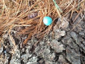 fallenRobin's egg