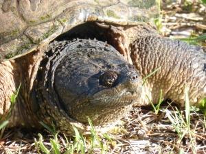 Courtesy of Seney Natural History Association on Flickr