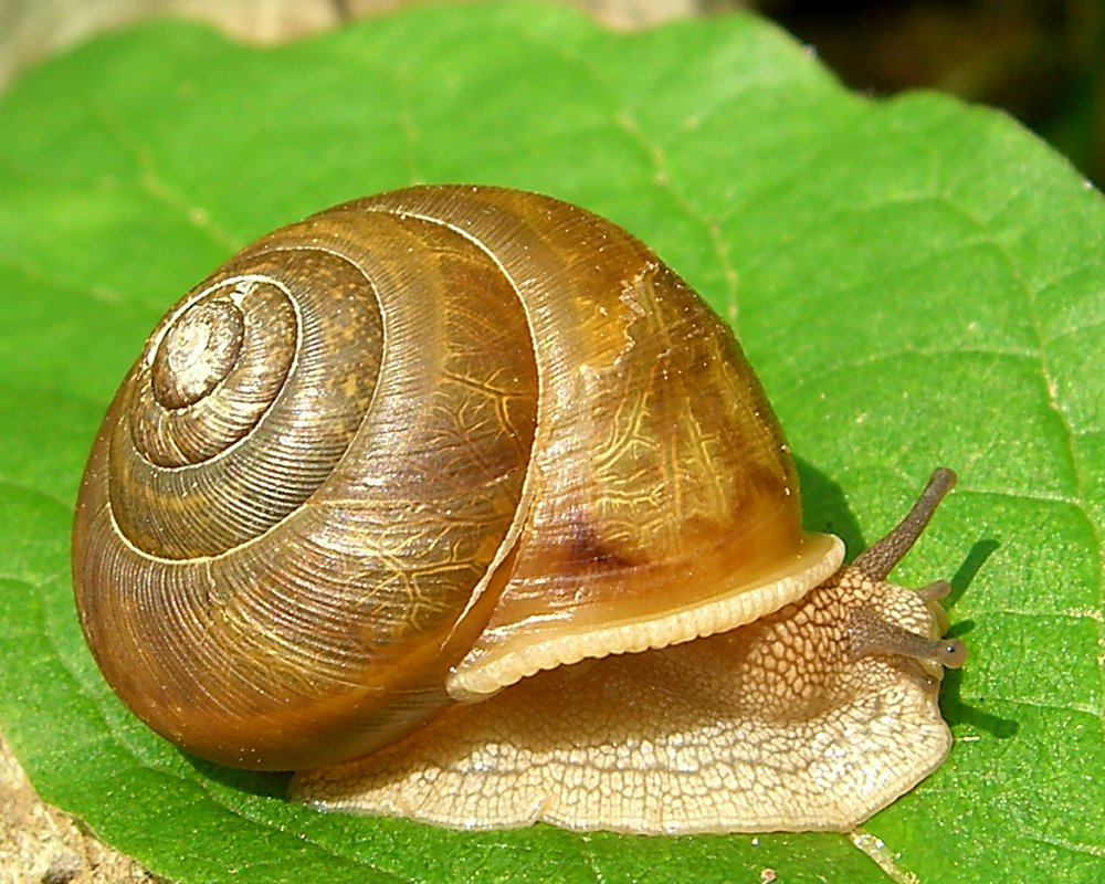 snails first person naturalist