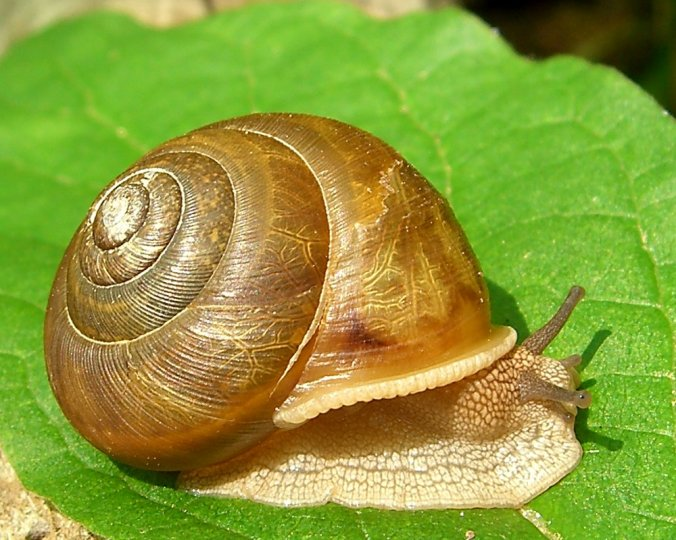Snail from Flickr