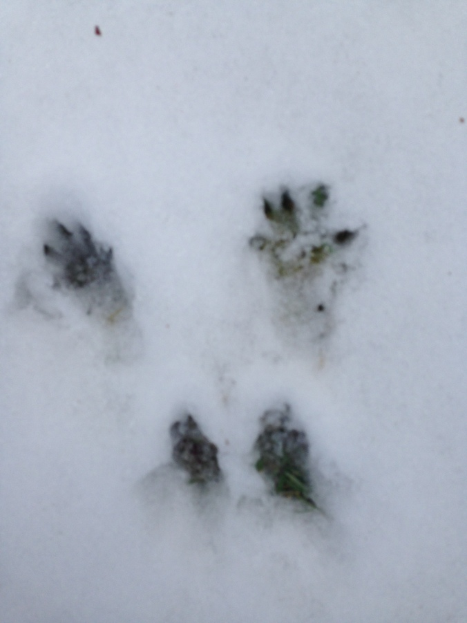 squirrel prints.jpg