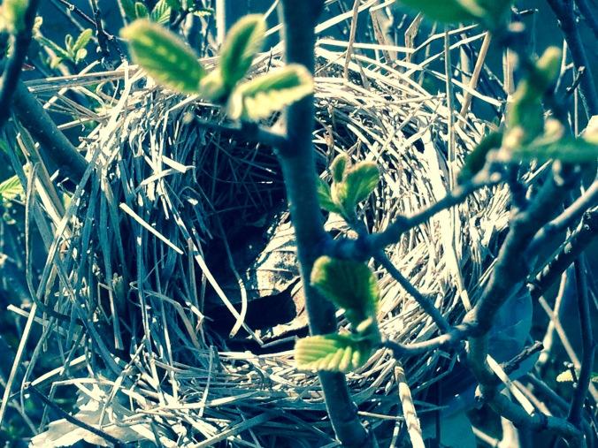 Found nest