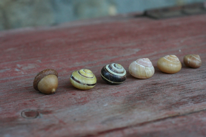 acorn and snail shells semiplume Flickr.jpg