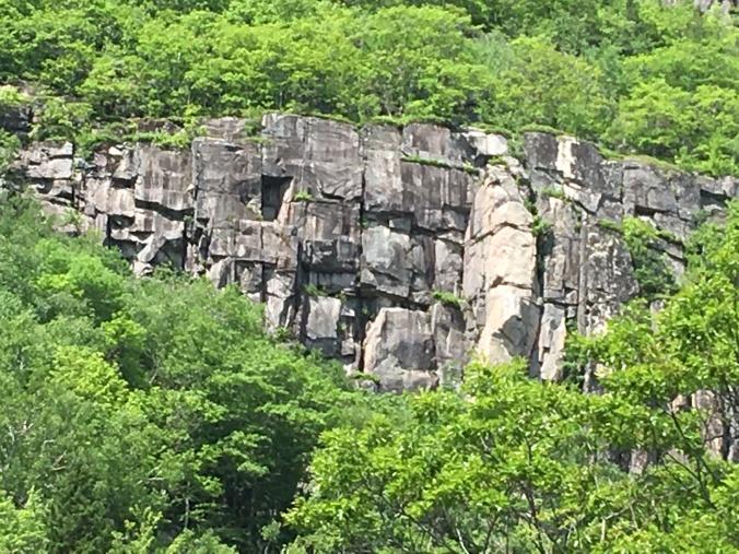 Peregrine cliff face Acadia