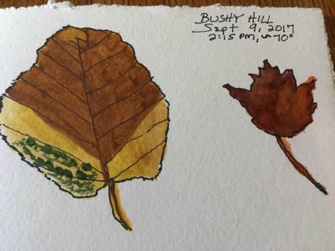 bushyHill drawings