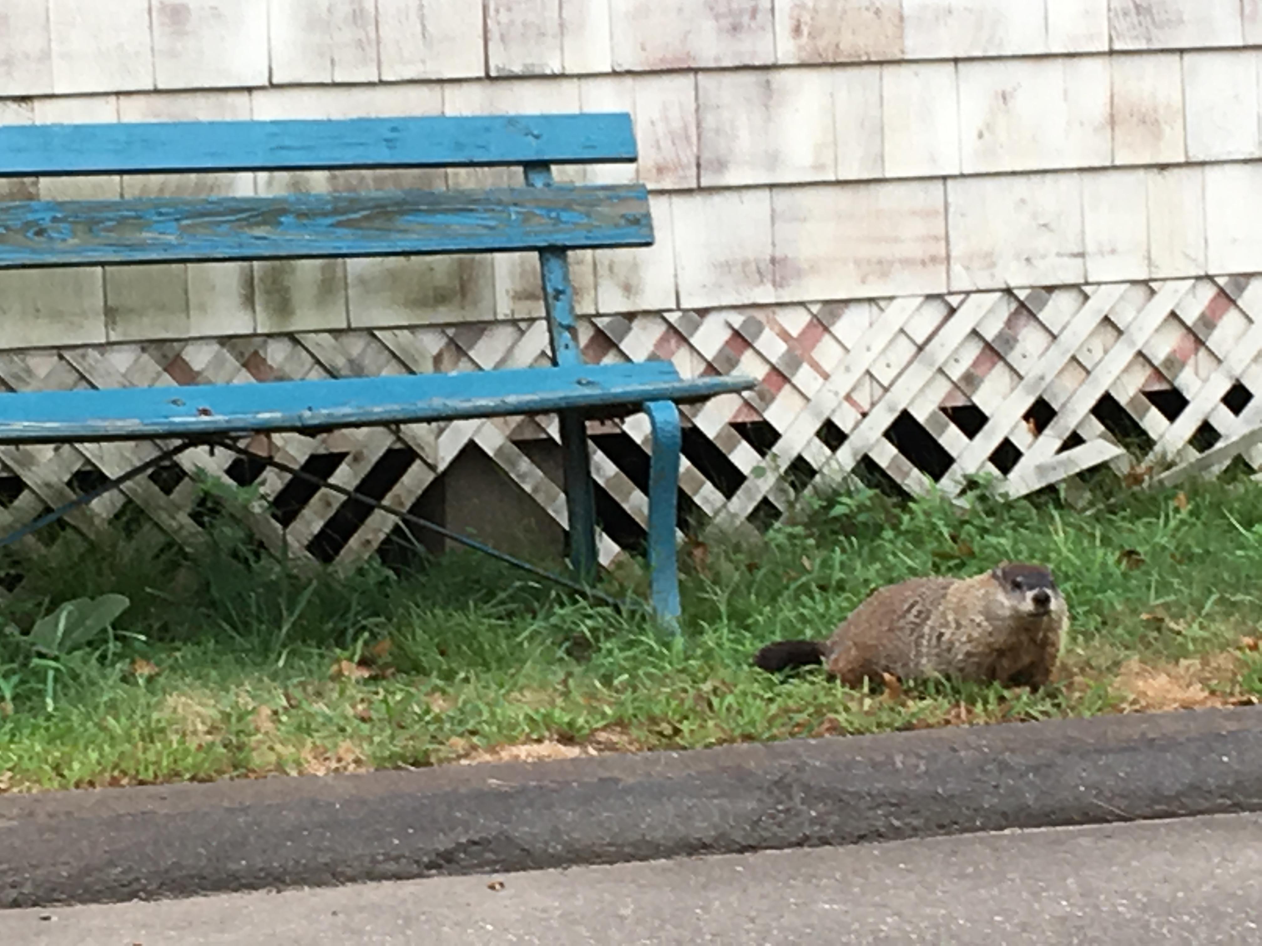 Groundhog Mercy