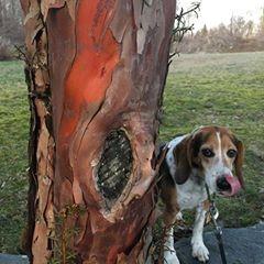 Buddy tree