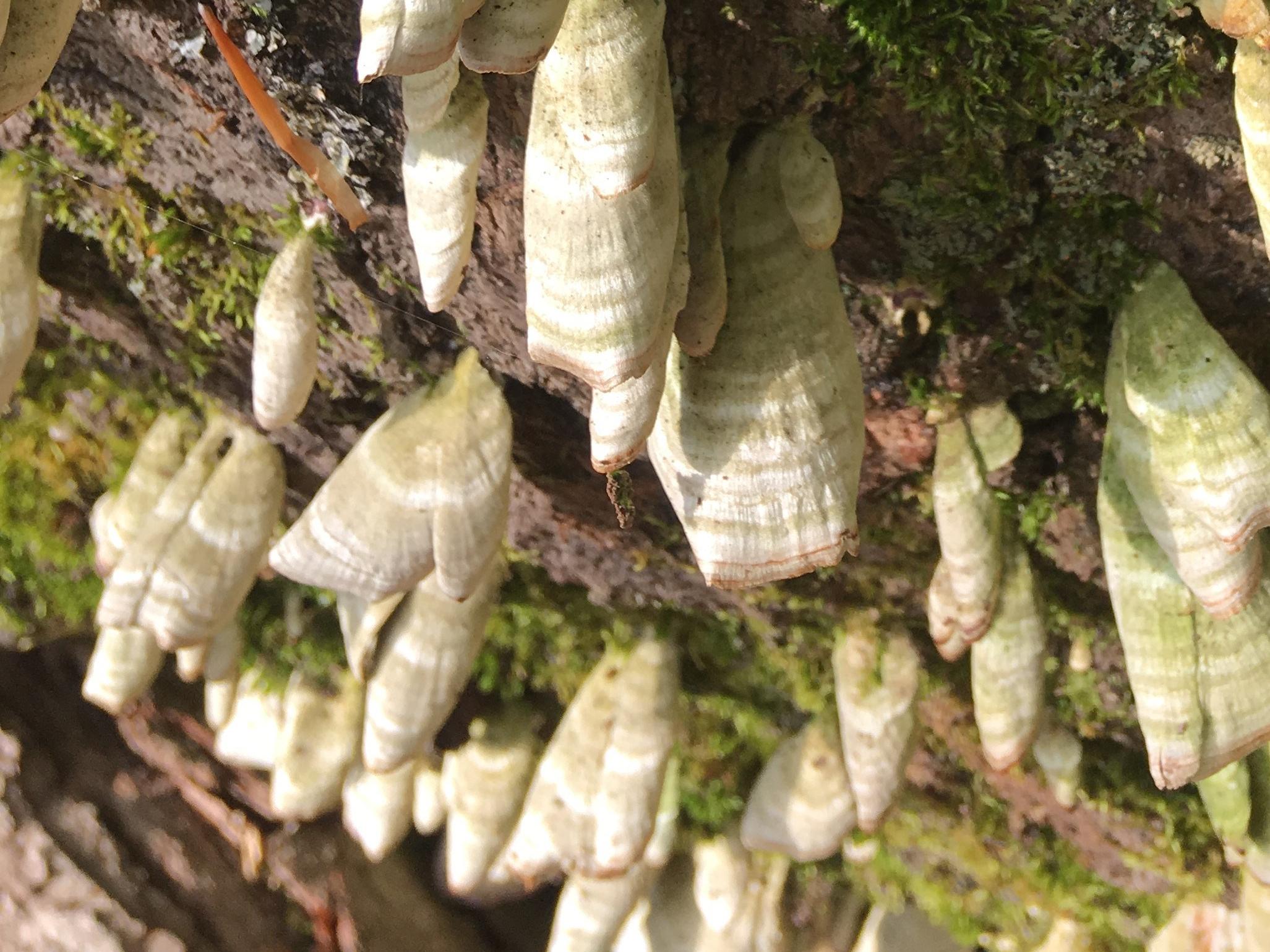 lichens-like-shells-crop.jpg